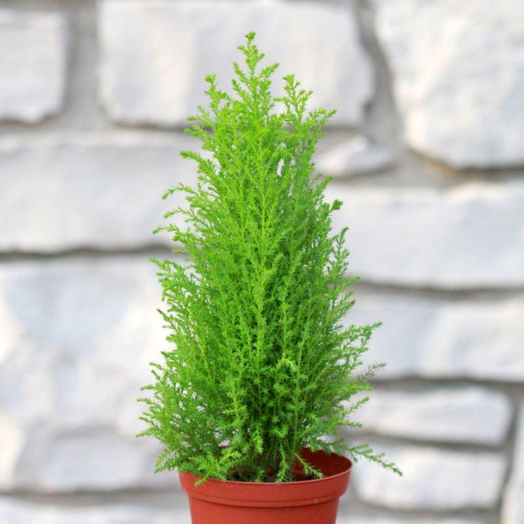 اسماء نباتات الزينة مع الصور اجمل صور انواع نباتات الزينه حلوه خيال