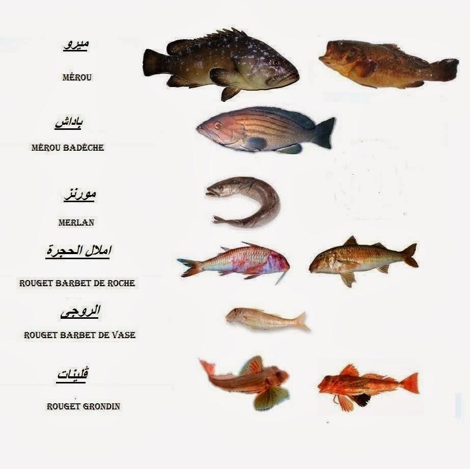 صورة صور انواع السمك , فصائل السمك المتنوعة