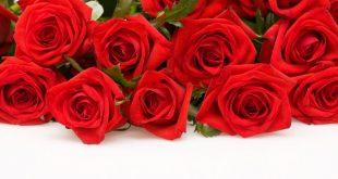 صور ورد غلاف , اجمل الورود الطبيعية بالصور