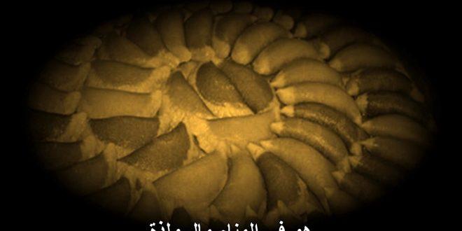 صورة القطايف في المنام , تفسير رؤية حلوى القطايف في الحلم