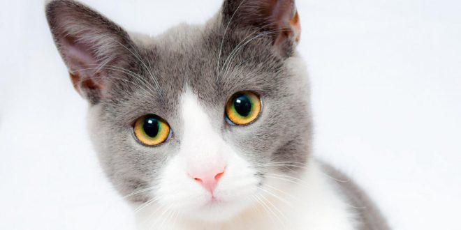 صورة طرد القطط من البيت في المنام , طردت قطة فى الحلم ده معناه ايه