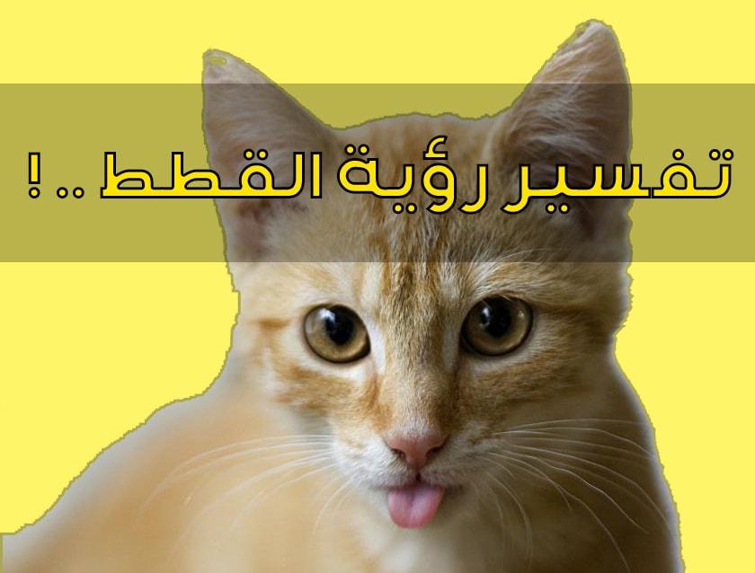 صورة تفسير حلم رؤية القطط في المنام , تفسير القطط في احلام بالتفصيل