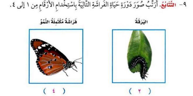 صورة بالصور دورة حياة الفراشة , هل تعلم ان الفراشه لها مراحل لتكوينها شاهد لتعرف