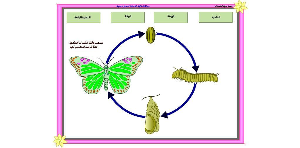 رسم دورة حياة الحيوانات للاطفال مراحل نمو الحيوان بالصور