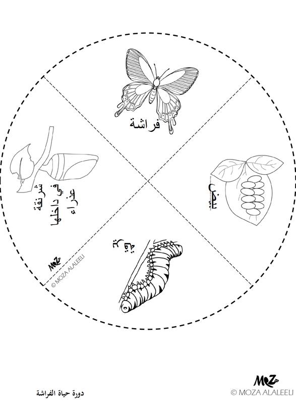 بالصور دورة حياة الفراشة هل تعلم ان الفراشه لها مراحل لتكوينها
