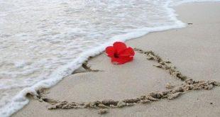 ثقف نفسك فيس بوك عن الحب , معلومات عن الحب