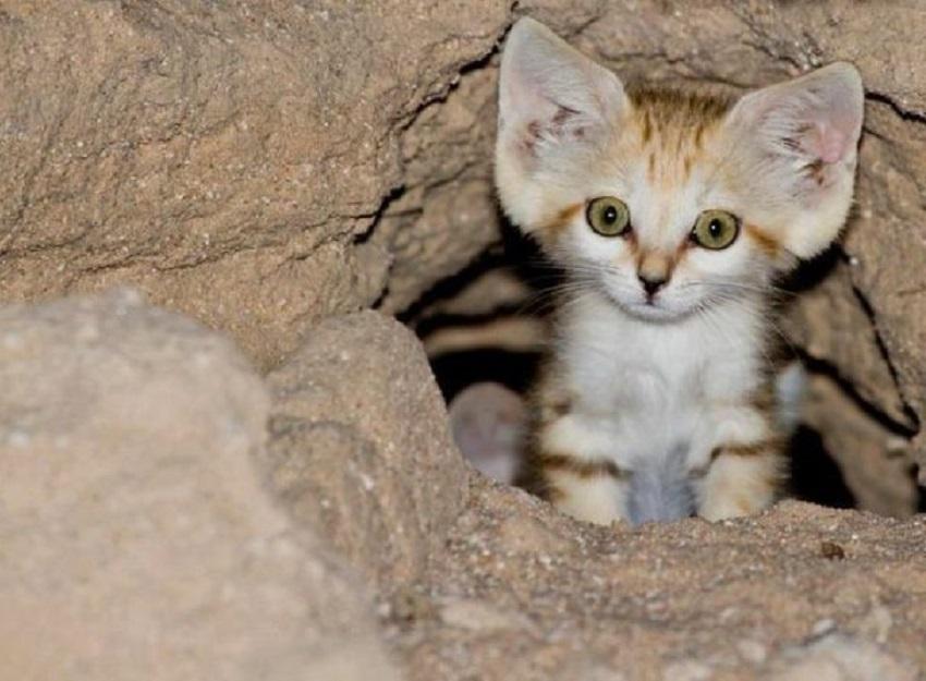 صورة الاسم العلمي للقط , معلومات عن القطط و الاسم العلمي لها