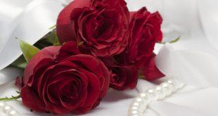 اسماء الورود مع الصور , اجمل صور الورود و اسمائها