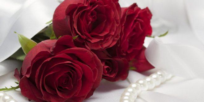 صورة اسماء الورود مع الصور , اجمل صور الورود و اسمائها