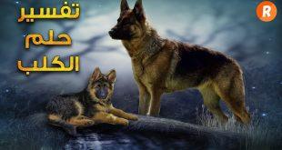 تفسير حلم كلب يهاجمني , راي مفسرو الاحلام في حلم الكلاب