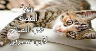 صور القطة في الحلم لابن سيرين , الحلم رسالة