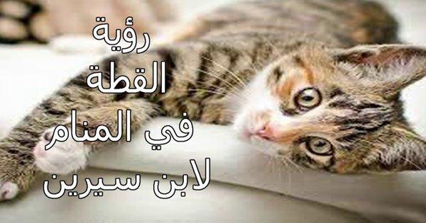 صورة القطة في الحلم لابن سيرين , الحلم رسالة