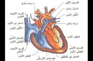 صور امراض القلب والشرايين وعلاجها , احمي نفسك من امراض القلب