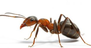 صور بحث عن النمل , معلومات غريبة
