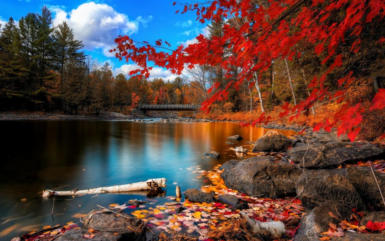 صورة اجمل الخلفيات الطبيعية , خلفيات طبيعية تصر النظر