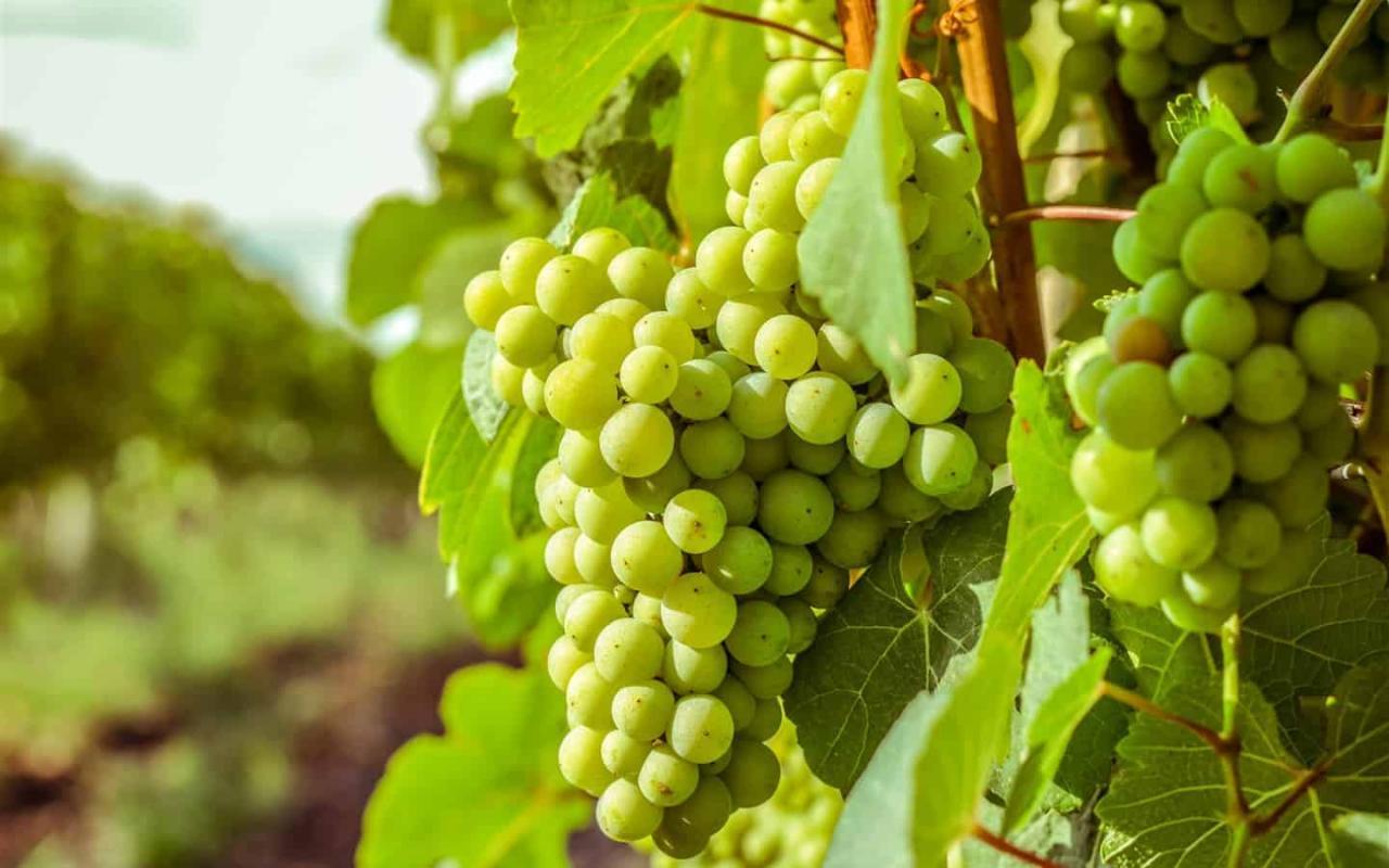 صورة اكل العنب في الحلم , تفسير رؤية اكل العنب في المنام