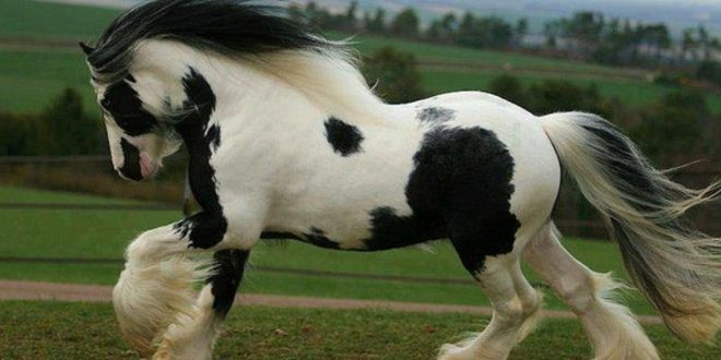 صورة تفسير حلم حصان , تفسير رؤية الحصان لابن سيرين