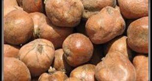 صورة فوائد الدوم باللبن , اهمية عصير الدوم باللبن وتناوله يوميا
