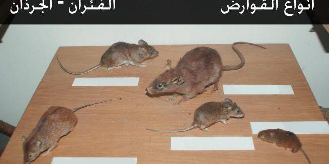 صورة طرق طرد الفئران من البيت , تخلص من الفئران المنزلية بكل سهولة