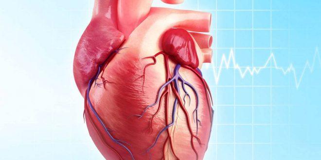 صورة اعراض انتفاخ القلب , اسباب انتفاخ عضلة القلب وكيفية الوقاية منها