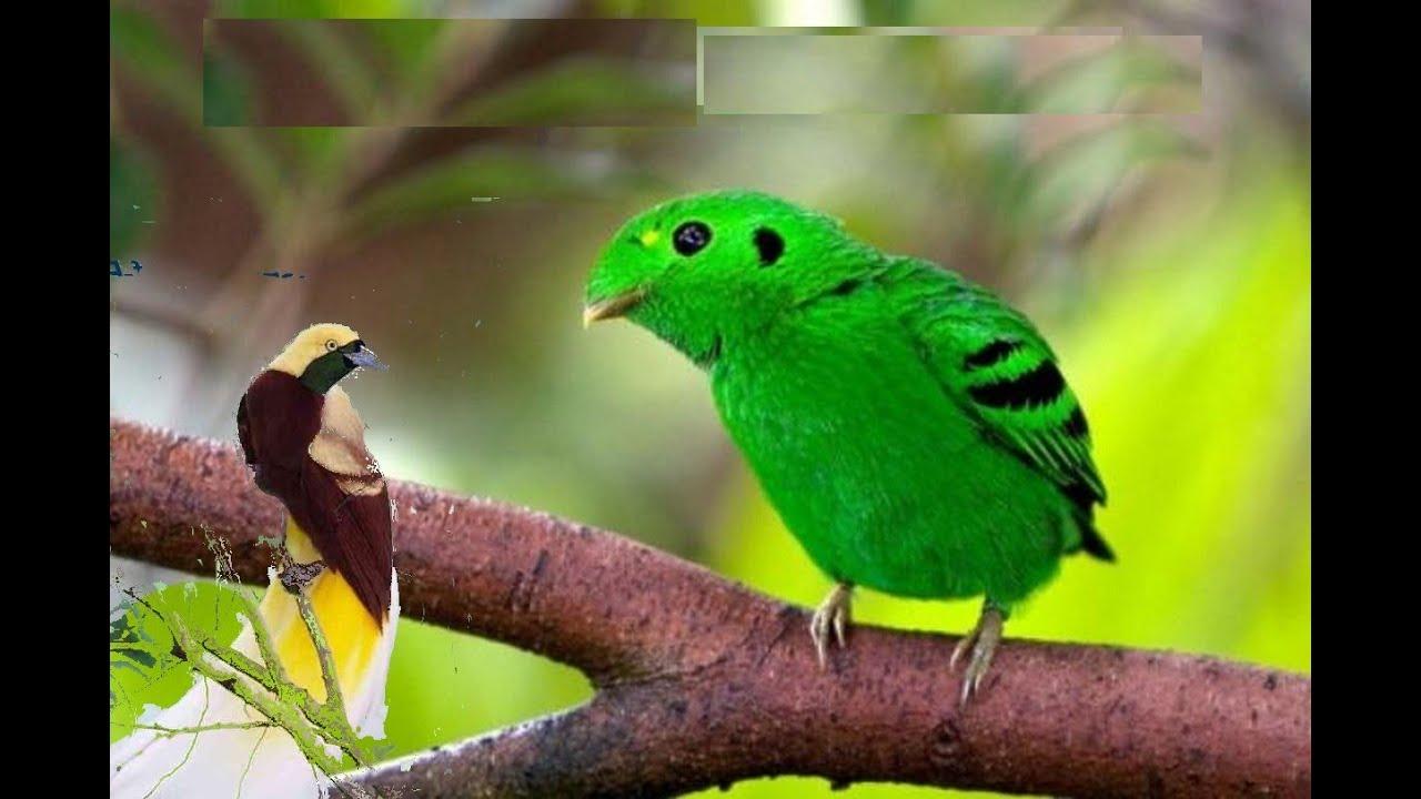 صورة طيور الزينه واسمائها , انواع الطوير الاليفة ذات الالوان المبهرة