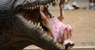 صورة تمساح ياكل فتاة , خطورة التماسيح ووجودها فى حديقة الحيوان