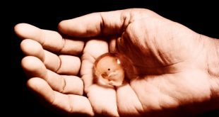 صورة طرق طبيعية للاجهاض , اسباب الاجهاض وما هى اعراضه