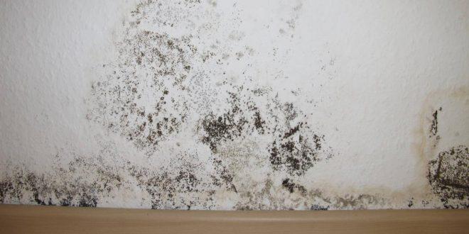 صورة الرطوبة في المنزل , ضرر الرطوبة فى البيت وازاى نتخلص منها